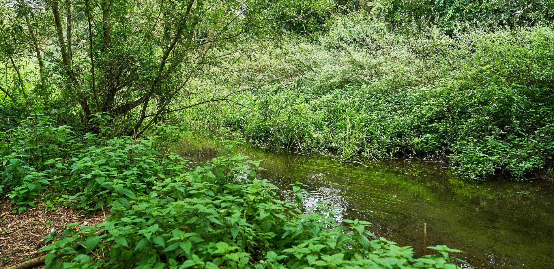 River_Colne_SJ_088.jpg