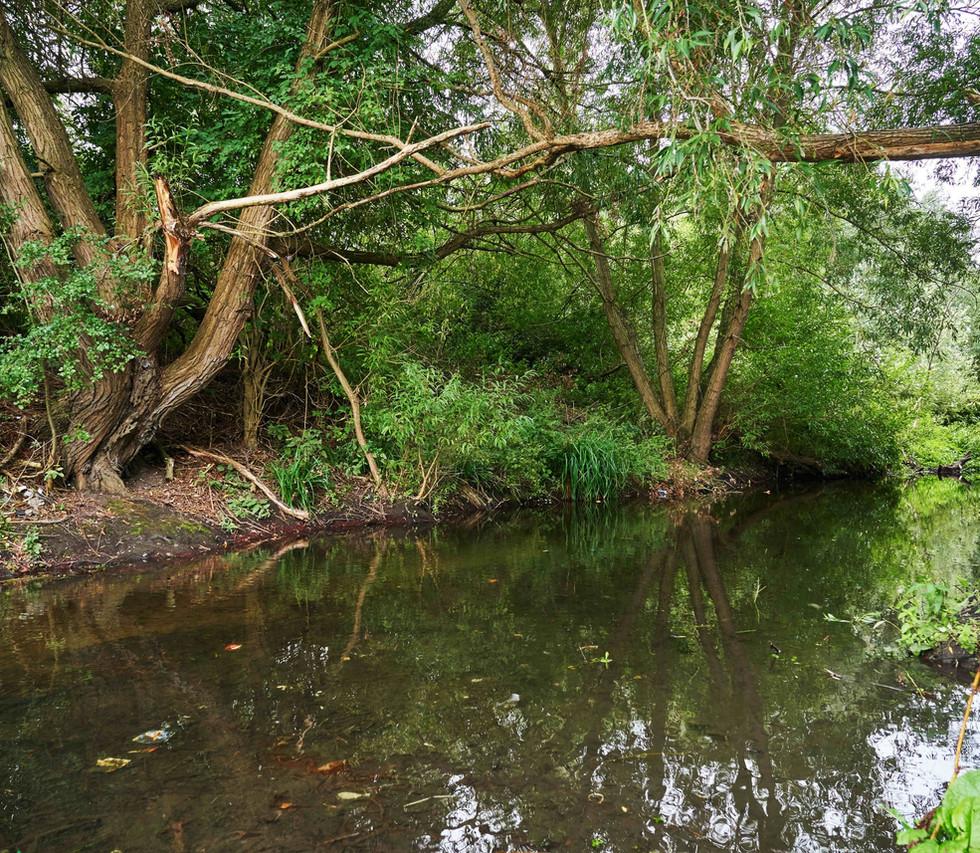 River_Colne_SJ_079.jpg