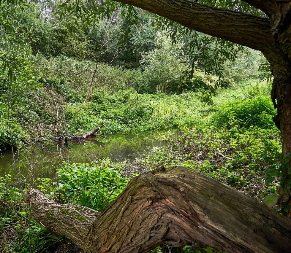 River_Colne_SJ_086.jpg