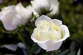 white-4739784_1920.jpg