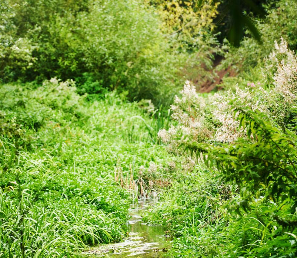 River_Colne_SJ_084.jpg