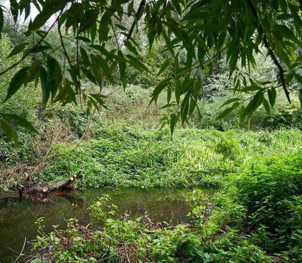 River_Colne_SJ_074.jpg