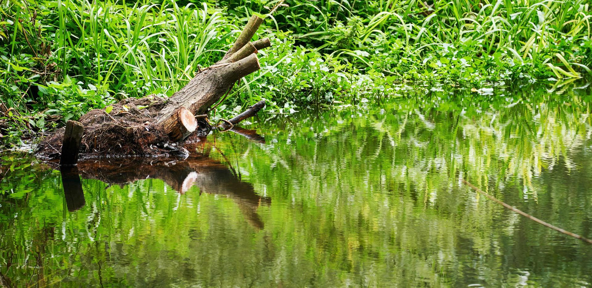 River_Colne_SJ_085.jpg