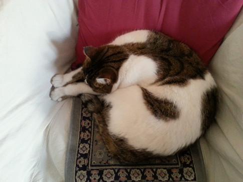 Piccola, the cat