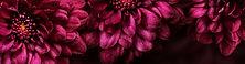 flower-2655557_edited_edited.jpg