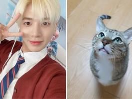 Taehyun sente tanta falta do seu gato que o seu pai enviou fotos dele