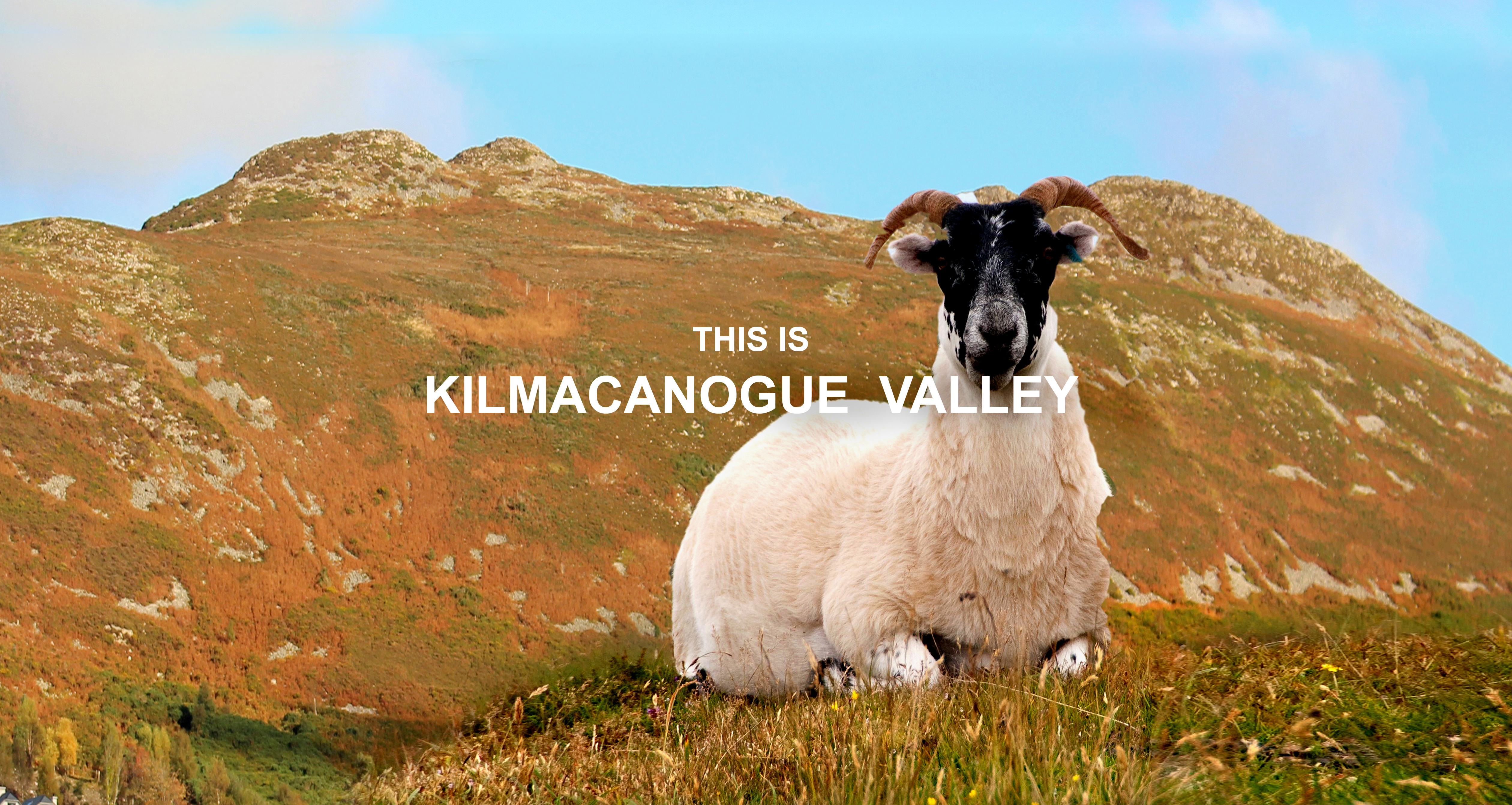 KAD. Sheep on Little Sugarloaf