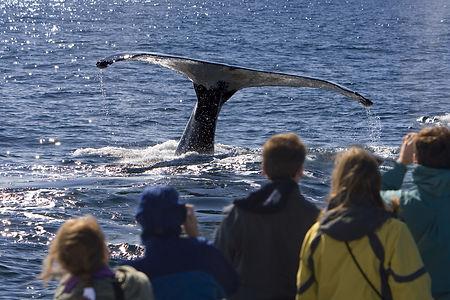 Watching whales off Hook Head shb.jpg