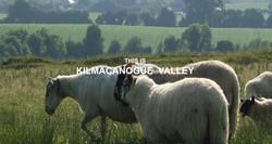 KAD. James Sheep 6
