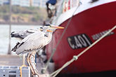 Wild birds and trawlers at Union Hall Co