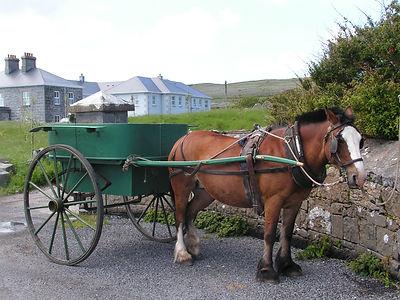 Pony and trap on Inishmor Island shb.jpg