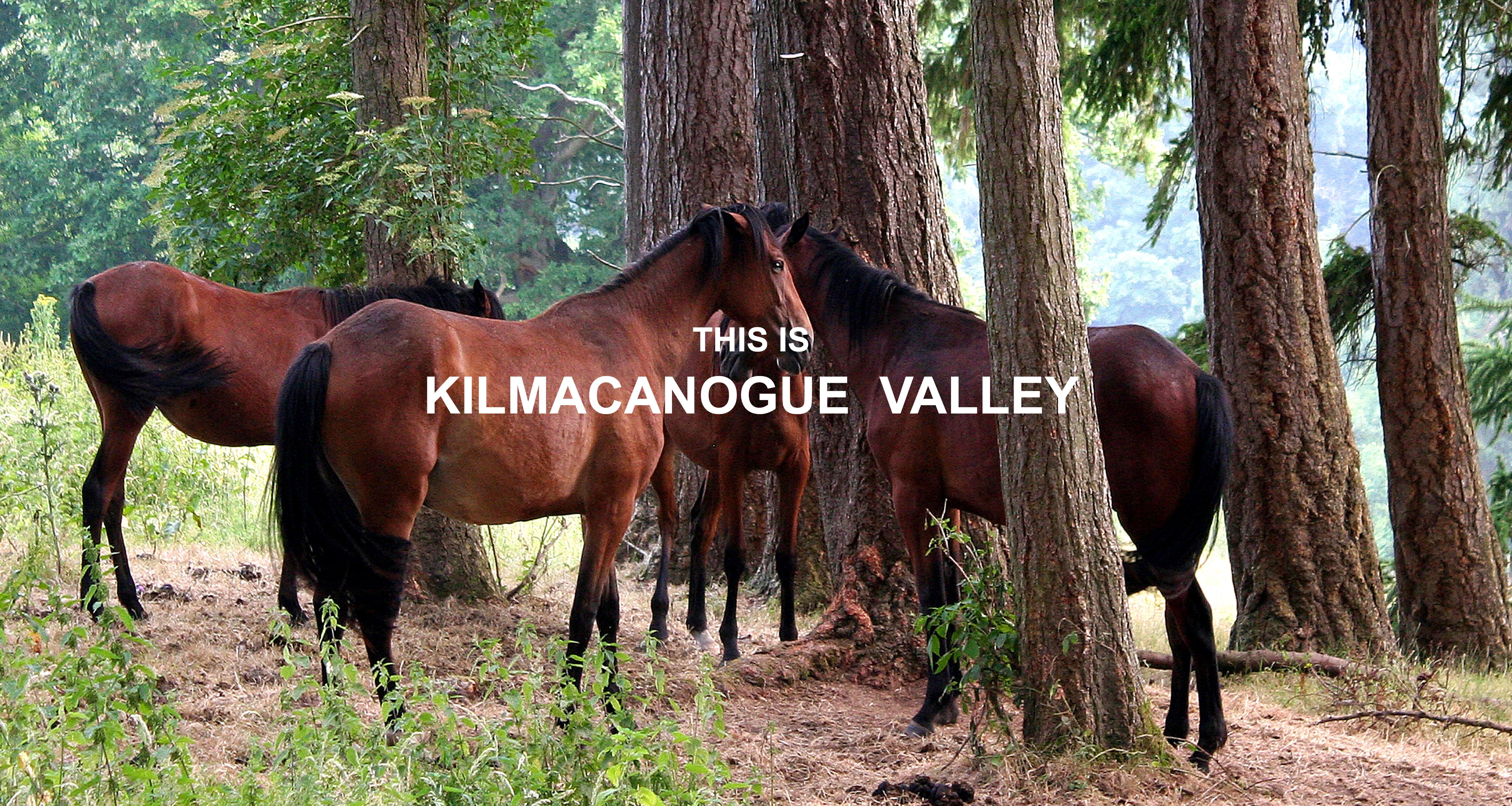 KAD. Horses at Kilruddery