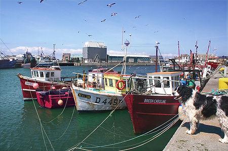 Howth Harbour, Dublin, Holiday Ireland.