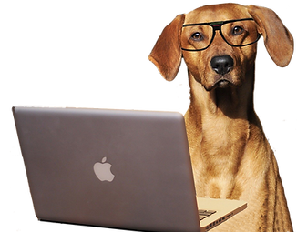 dog-laptop transp w.png