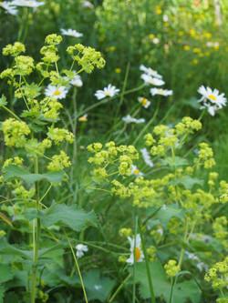 Bloemen particuliere tuin