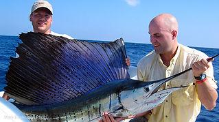 endless-summer-sailfish.jpg