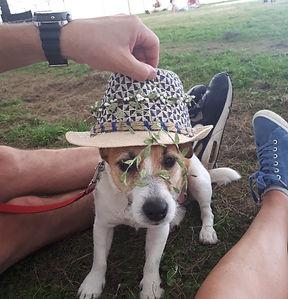 Reggie Sunshine Festival.jpg