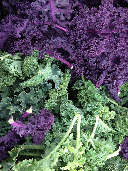 Red or Green Curly Kale - 1 bunch