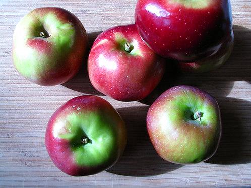 Macoun Apples - 5 lb bag