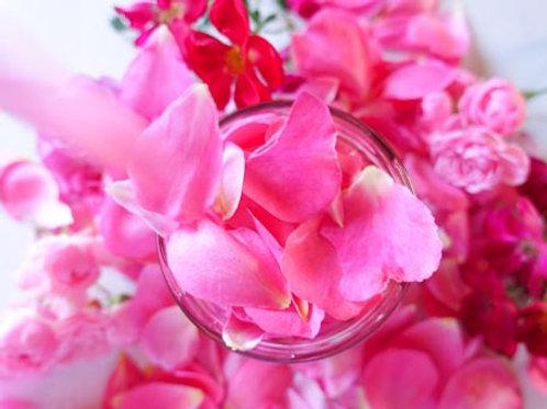 Fresh Rose Petals (edible!) - 16 oz deli container