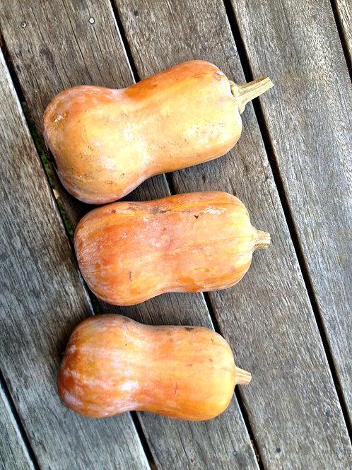 Honeynut Squash - 1 squash (about 1/2 lb)