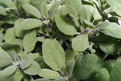 Fresh Sage - one bunch