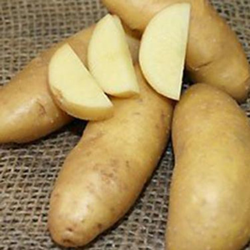 Russian Banana Fingerling Potatoes - 1 lb