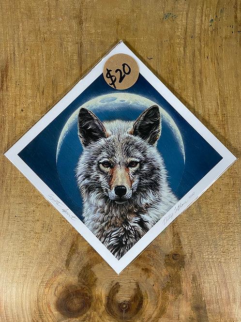 'Coyote Spirit' Acrylic Print - 8x8 inch
