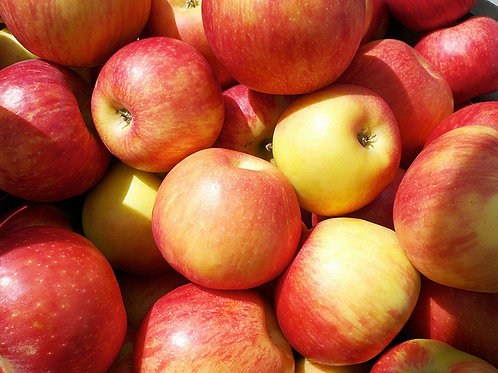 Honey Crisp Apples -5 lb bag