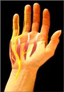 השרירים של כף היד