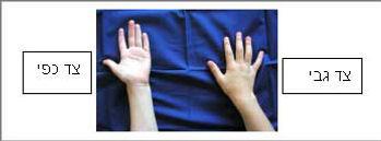 תאור צדדי היד