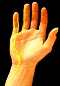 מיקום העצב האולנרי בכף היד
