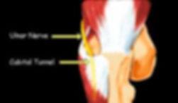 אנטומיה של המרפק