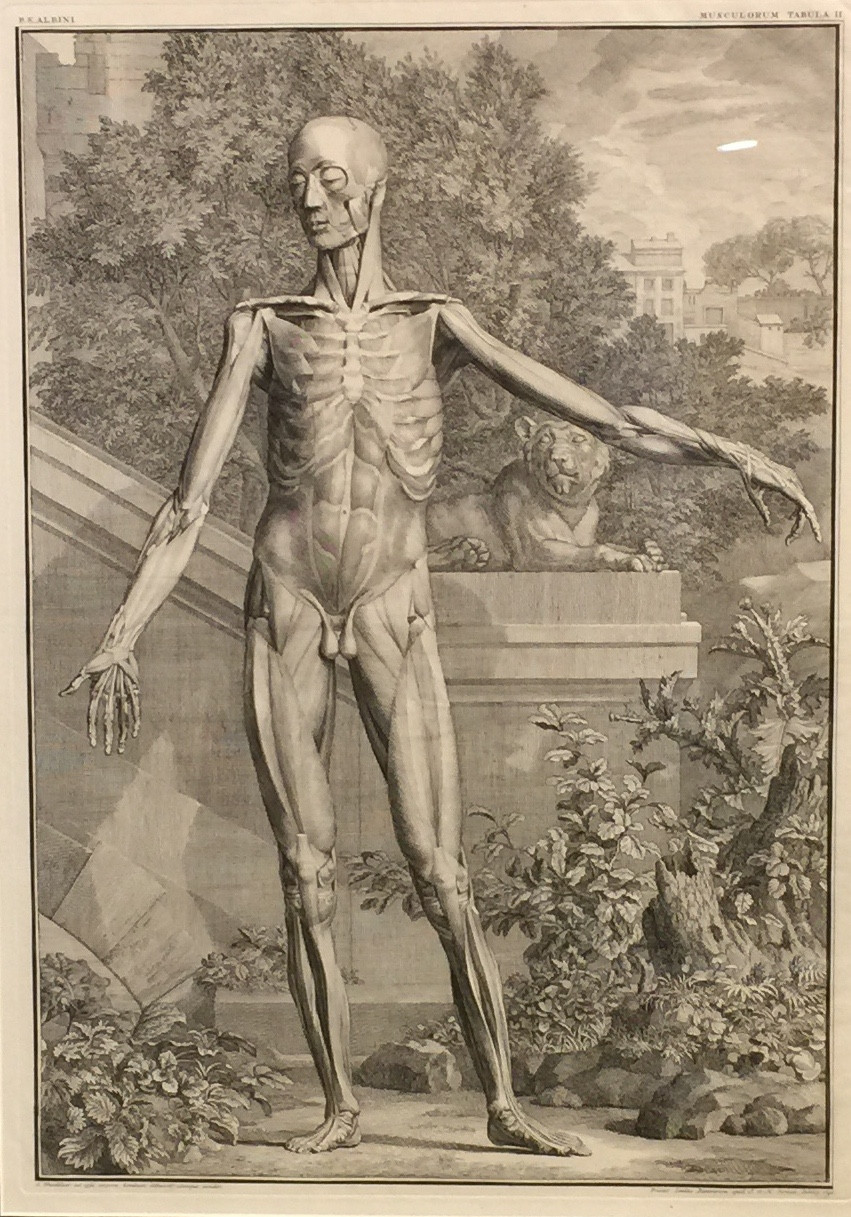 Anatomische voorstelling
