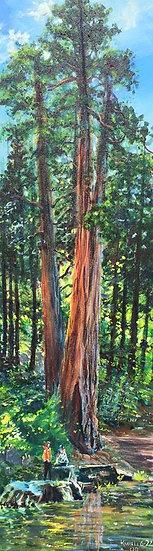 """Big Tree - 12""""x 40"""""""