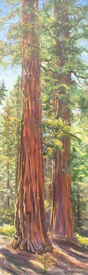 "Sequoia Trees 12""x 36"""
