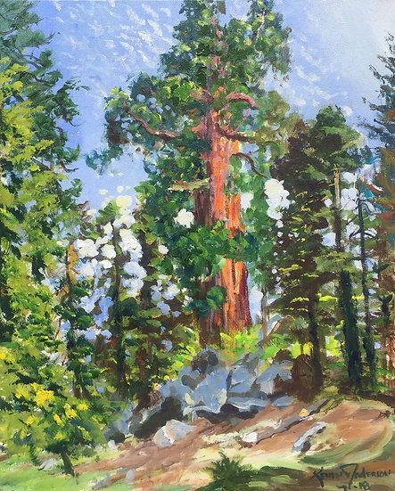 """Sequoia 16""""x 20"""""""