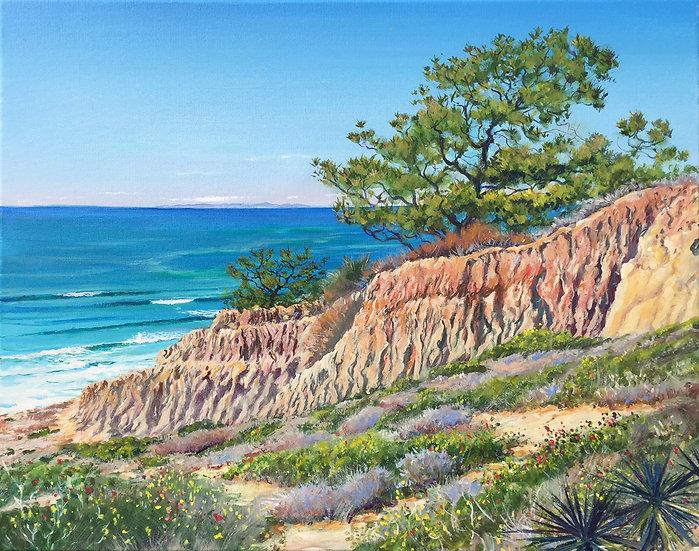 Torrey Pines Natural Reserve