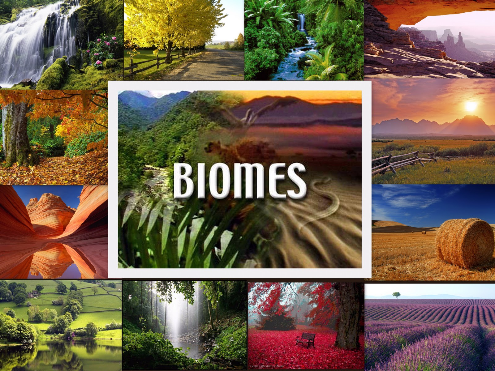 Altering Biomes