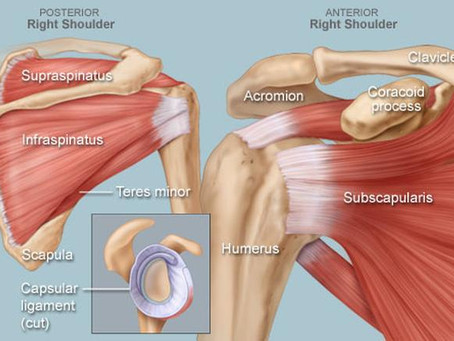 The Rotator Cuff Explained