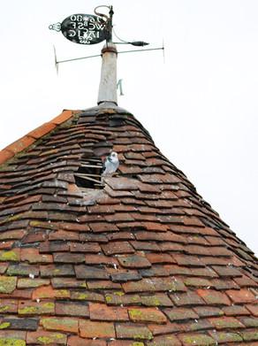 Roof 3.jpg