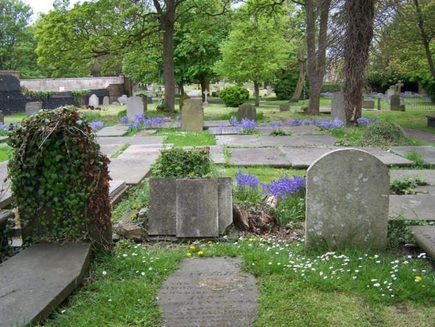 Wildflowers in the cemetery, Bridget Heriz