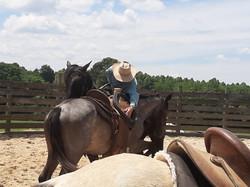Saddle Horse Work