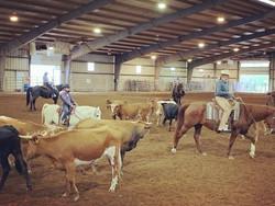Cattle Work