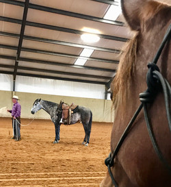 Helping Horses with Their People