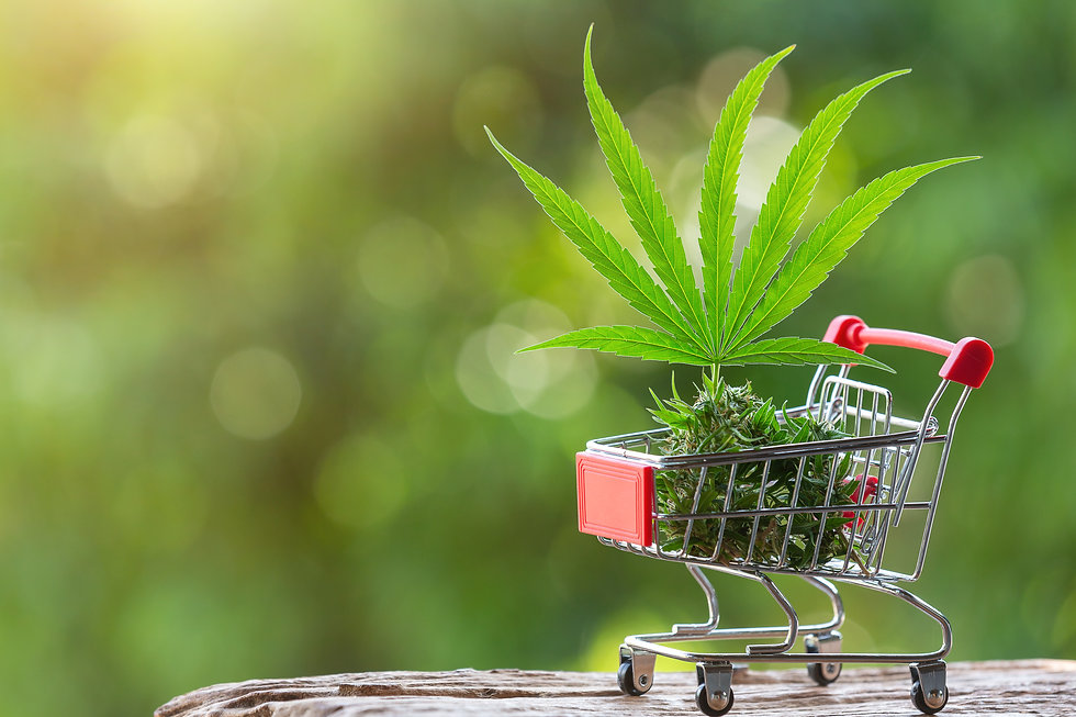 cannabis-leaves-shoots-placed-shopping-c