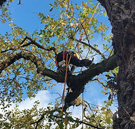 Tree Surgeon in Coventry