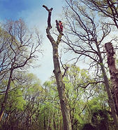Tree Removal Warwickshire