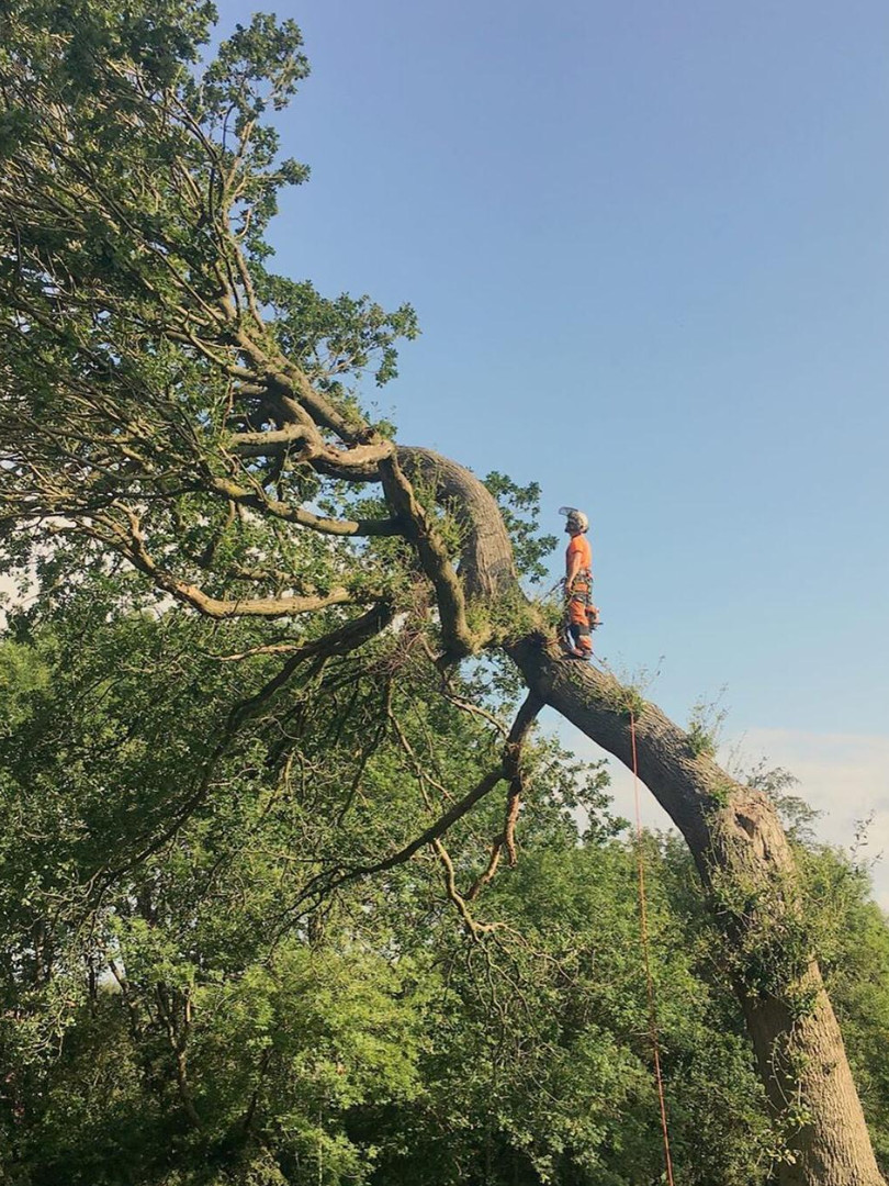 Arboriculture and Tree Specialists