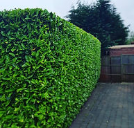 Hedge Trimming Services Warwickshire